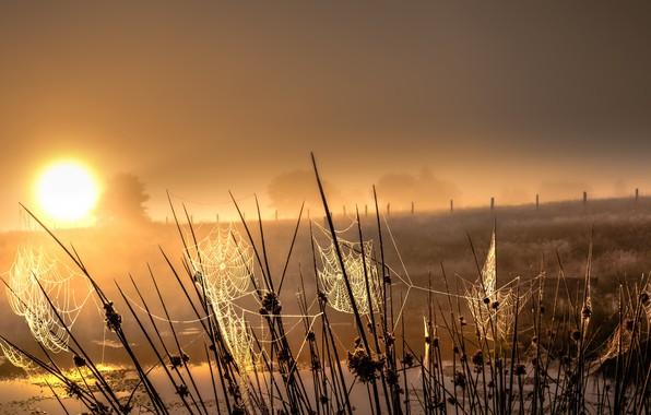 Картинка трава, закат, паутина