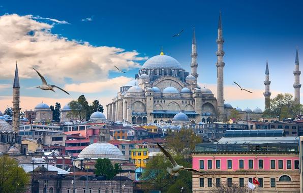 Картинка небо, облака, птицы, чайки, дома, башни, храм, Стамбул, Турция, Голубая мечеть