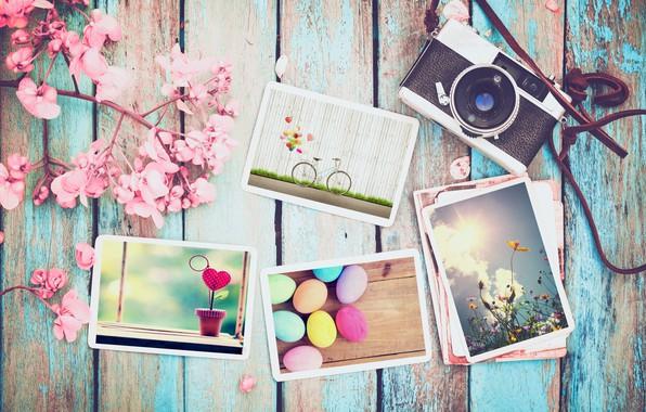 Картинка цветы, фото, яйца, весна, камера, colorful, Пасха, wood, pink, flowers, camera, spring, Easter, eggs, decoration, …