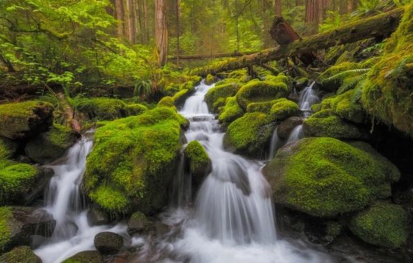 Картинка лес, ручей, камни, водопад, мох, речка, каскад, Washington, штат Вашингтон, Olympic National Park, Национальный парк …