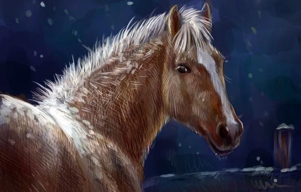 Картинка зима, природа, конь, лошадь, масло, арт, акварель, карандаш, живопись, лошадка, гуашь, wallpaper., картина painting, ночь …