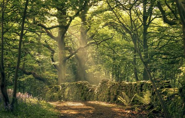 Картинка лес, лучи, деревья, стена