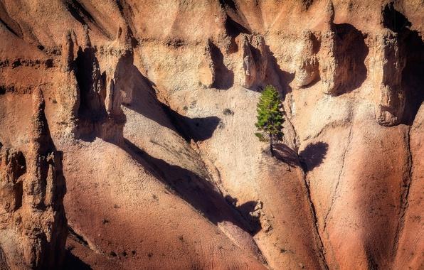 Картинка природа, дерево, скалы, тени