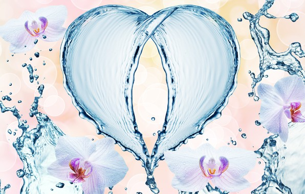 Картинка вода, капли, цветы, брызги, узор, сердце, орхидеи