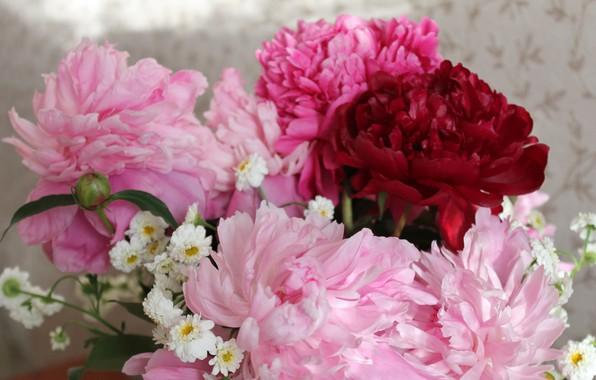 Картинка цветы, букет, весна, розовые цветы, пионы