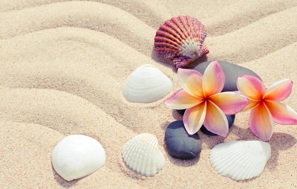 Картинка песок, пляж, лето, цветы, камни, ракушки, summer, beach, flowers, sand, плюмерия, plumeria, pebbles, seashells