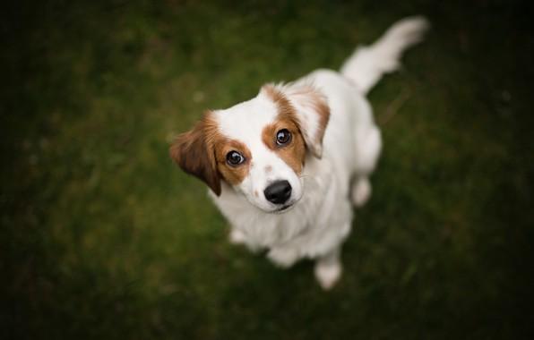 Картинка взгляд, собака, мордашка, боке