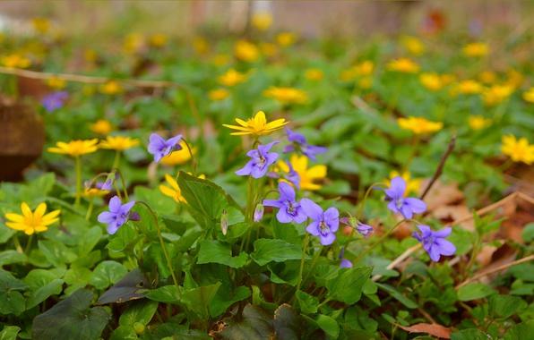 Картинка Весна, Цветочки, Flowers, Spring