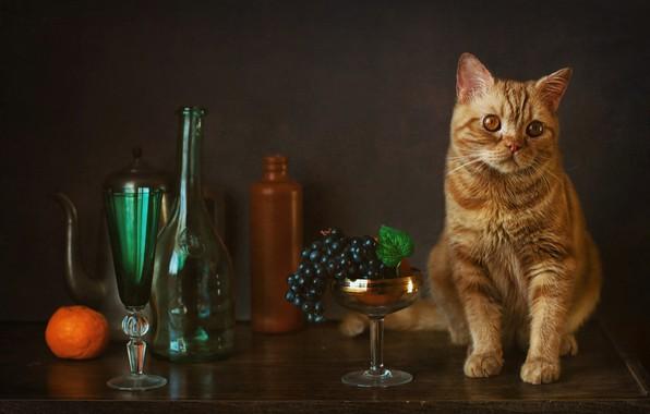 Картинка бокал, виноград, бутылки, мандарин, рыжий кот, котейка