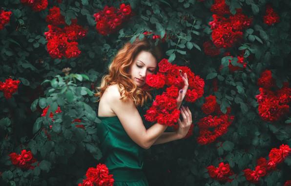 Картинка девушка, цветы, поза, настроение, розы, руки, Натали