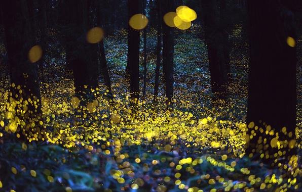 Картинка лес, ночь, светлячки, вечер, боке