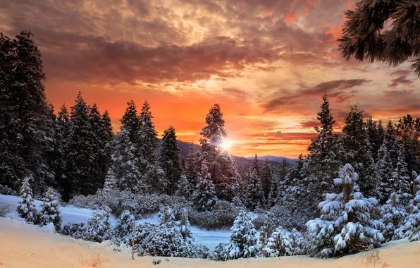 Картинка зима, лес, небо, облака, снег, деревья, горы, Канада, зарево