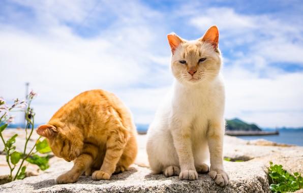 Сhrееру cats