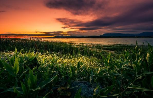 Картинка поле, трава, закат