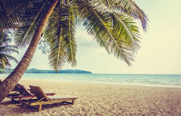 Картинка море, пляж, пейзаж, тропики, пальма, пальмы, голубая вода