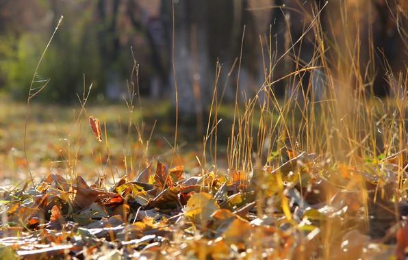 Картинка осень, листья, фон, травка, сухостой