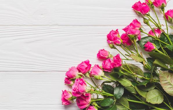 Картинка цветы, розы, розовые, бутоны, wood, pink, flowers, beautiful, roses
