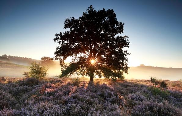 Картинка поле, лето, небо, трава, солнце, цветы, туман, дерево, рассвет, утро, луг