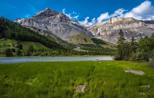 Картинка лес, трава, горы, озеро, Швейцария, Switzerland, Bernese Alps, Бернские Альпы, Valais, Озеро Дерборанс, Derborence, Валлис, …