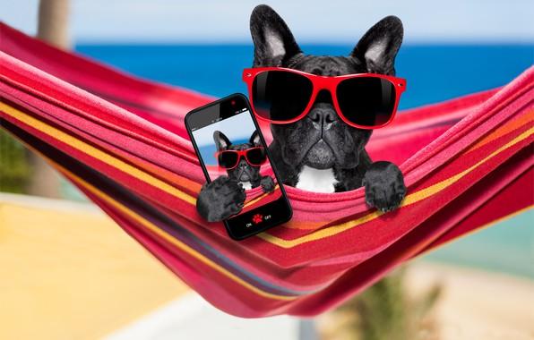 Картинка собака, очки, гамак, телефон