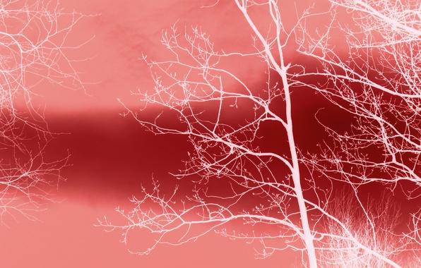 Картинка фон, дерево, цвет