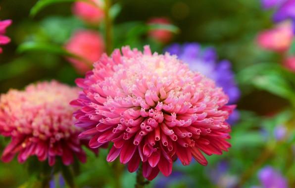 Картинка Цветок, Розовый цветок, Pink flower