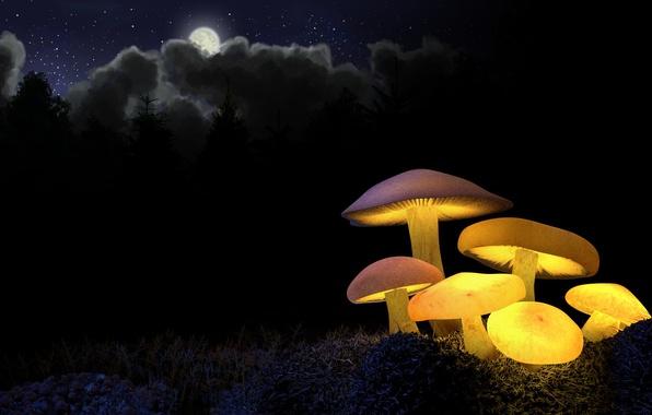 Фото обои лес, свет, ночь, желтый, луна, грибы, свечение, ели