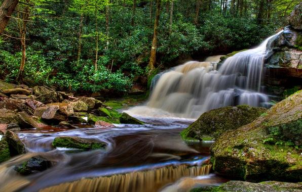 Картинка лес, деревья, ручей, камни, водопад, США, Elakala Falls, Blackwater Falls State Park