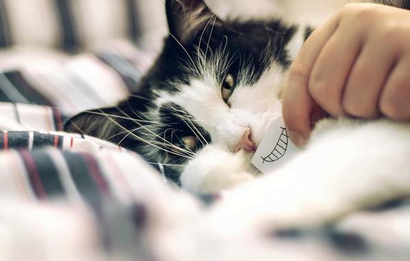 Картинка кот, взгляд, улыбка, юмор, боке