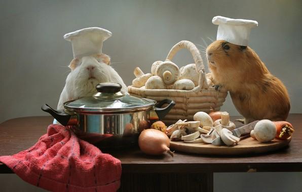 Картинка корзина, грибы, лук, кастрюля, колпаки, шампиньоны, грызуны, поварята, морские свинки