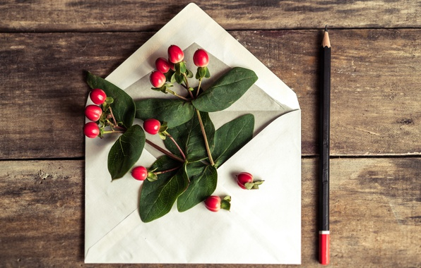 Картинка цветы, карандаш, love, romantic, конверт, gift, letter