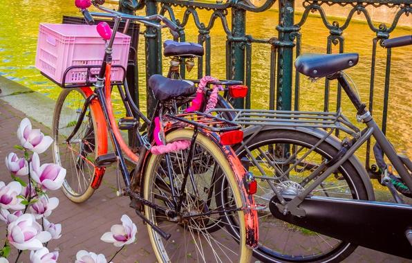 Картинка велосипед, река, весна, Амстердам, bicycle, цветение, bike, blossom, Amsterdam, flowers, old, spring, buildings, Netherlands, canal