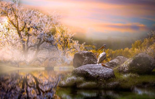 Картинка деревья, пейзаж, природа, камни, птица, утро, водоём, пеликан, Thai Phung