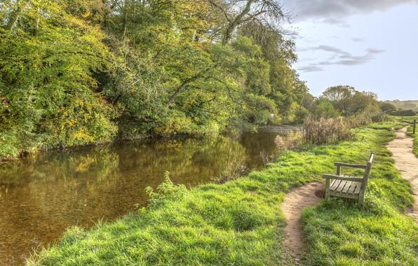 Картинка зелень, река, Деревья