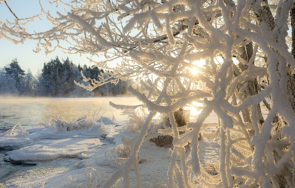 Картинка зима, иней, солнце, свет, ветки, природа