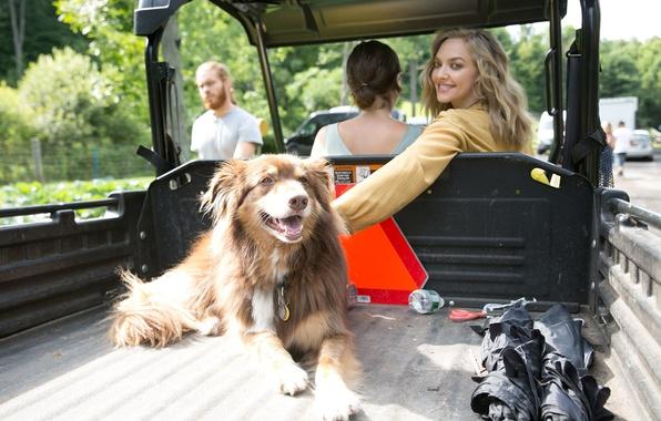 Картинка авто, улыбка, собака, актриса, блондинка, кузов, Amanda Seyfried, Аманда Сайфред, Allure, Scott Trindle