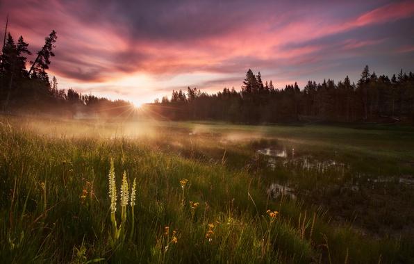 Картинка лес, трава, вода, солнце, свет, роса, утро