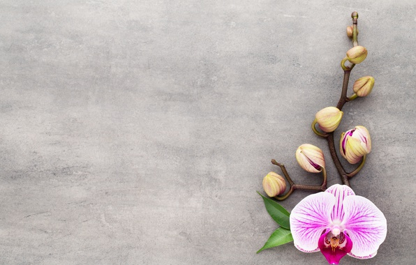 Картинка flower, орхидея, pink, orchid
