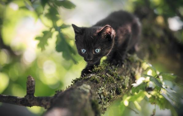 Картинка природа, дерево, животное, листва, ствол, котёнок