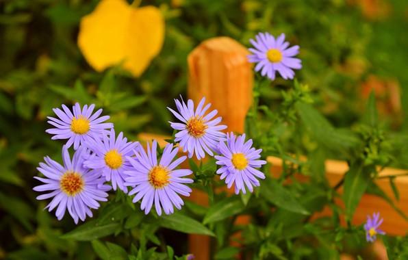 Картинка Цветочки, Фиолетовые цветы, Purple flowers