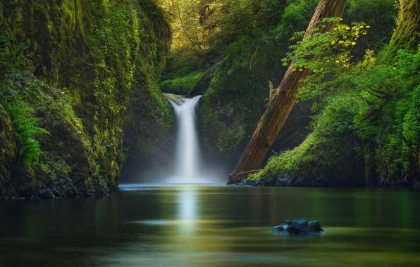 Картинка деревья, природа, река, растительность, водопад, США, ictor Carreiro