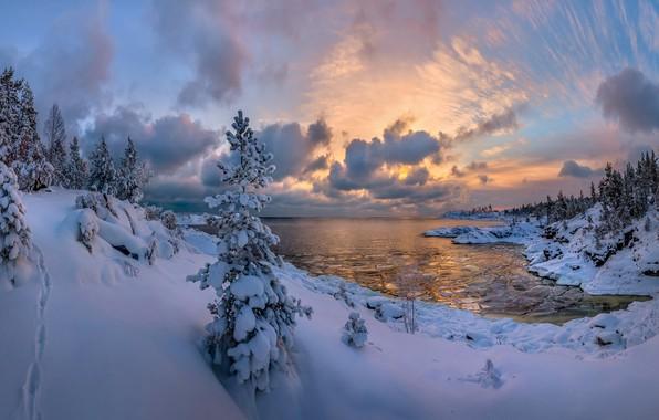 Картинка зима, лес, снег, озеро, ели, сугробы, Россия, Ладожское озеро, Карелия