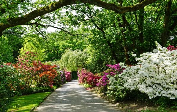 Картинка зелень, деревья, цветы, парк, Германия, дорожка, аллея, кусты, рододендрон, Grugapark Essen