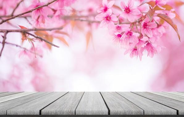 Картинка небо, ветки, весна, сакура, цветение, pink, blossom, sakura, cherry, spring, bloom, vintag