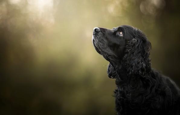 Картинка морда, фон, портрет, собака, профиль, боке