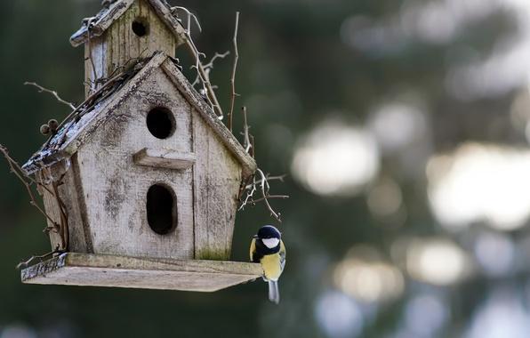 Картинка фон, птица, домик