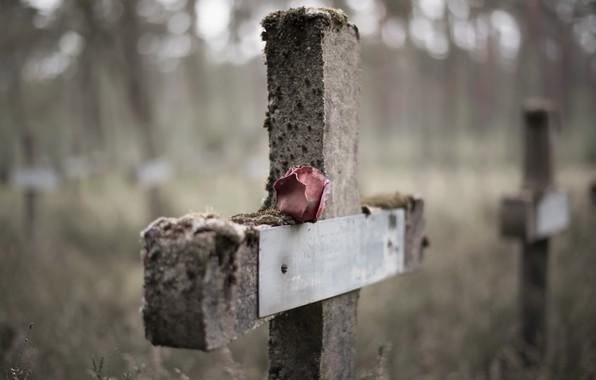 Картинка роза, крест, кладбище