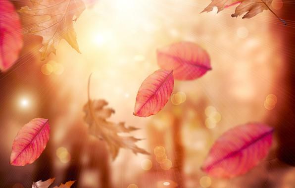 Картинка осень, листья, листопад, блюр