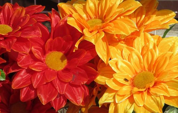 Картинка цветы, яркие, искуственные цветы