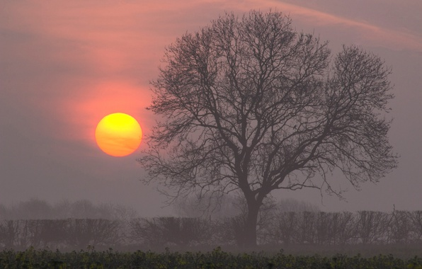 Картинка солнце, дерево, рассвет, утро